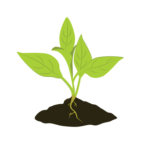 plant growing: Raster illustration plant growing in the ground. Little plant seedling. Seedling icon