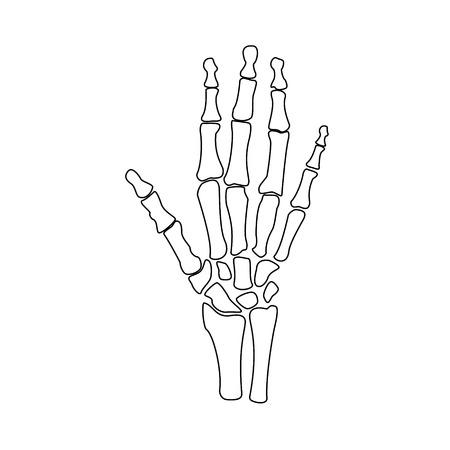 Vector ilustración de los huesos de mano contorno dibujo. icono esqueleto humano mano ortopédica. centro de diagnóstico