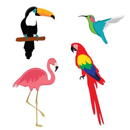 humming: Vector illustration pink flamingo, macaw parrot, toucan and humming bird. Exotic bird set. Illustration