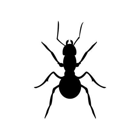 formica: Vector illustration insect anatomy. Formica exsecta. Ant black  silhouette isolated on white background