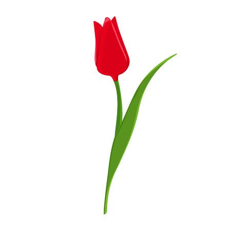 Illustrazione vettoriale bella tulipano rosso. Fiori di primavera. icona piatta Fiore rosso