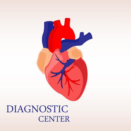 vein valve: Vector illustration human heart anatomy icon, symbol. Diagnostic center