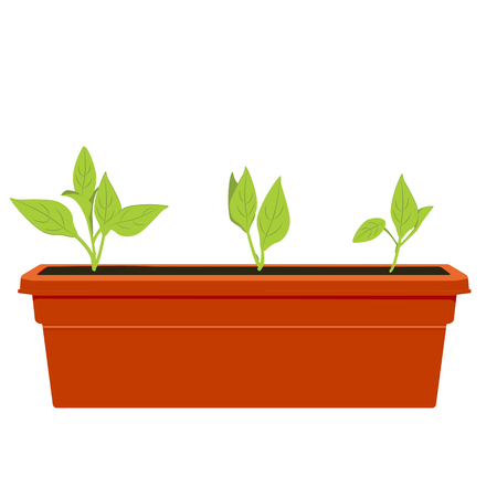 seedlings: Vector illustration flower pot. Flowers, plants growing in a pot. Potted plant icon. Little plant seedling. Seedling icon