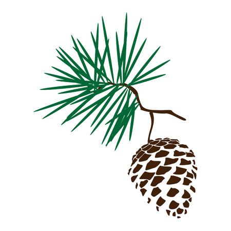 cedro: Ilustración del vector del icono Silhoutte rama piña. madera de la naturaleza del cono del pino