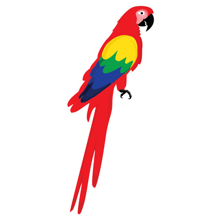 macaw: Raster illustration colorful macaw parrot. Beautiful macaw. Cartoon red parrot