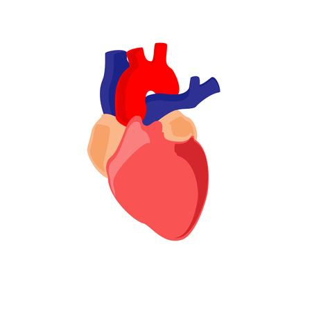 Raster illustration human heart anatomy icon, symbol. Diagnostic center Stock Photo