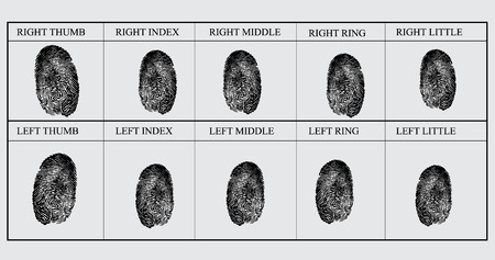 Vector illustration fingerprint card sample. Identification. Set of finger prints