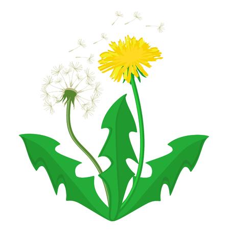Vector illustration bouquet of dandelions with leaves. Summer flower yellow dandelion. Dandelion vector icon,