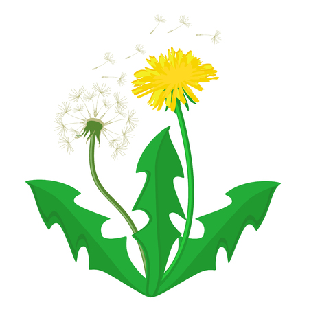 Vector illustration bouquet of dandelions with leaves. Summer flower yellow dandelion. Dandelion vector icon,