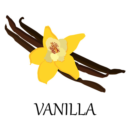 vainilla flor: Vector illustration vanilla flower and beans. Spice icon Vectores