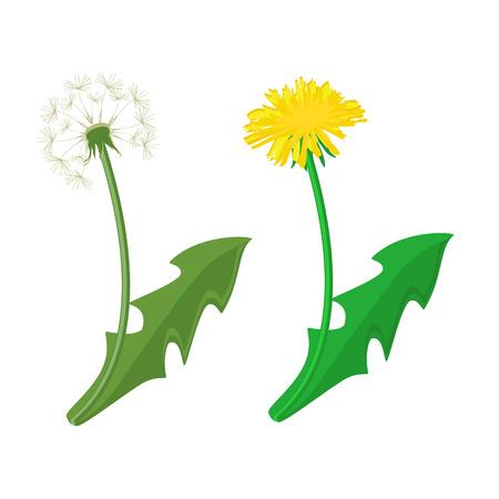 Illustration vectorielle pissenlits aux feuilles. Fleur de l'été fleur de pissenlit jaune. Icône du vecteur pissenlit Vecteurs