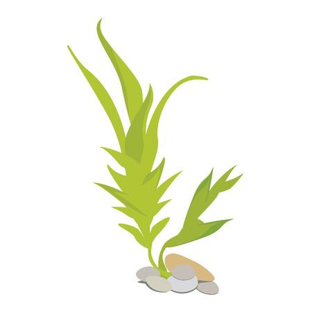 Vector illustration green algae with stones for aquarium. Marine alga. Seaweed symbol. Cartoon underwater plants
