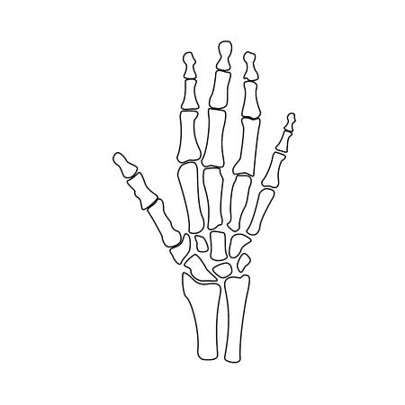 Raster ilustración dibujo de contorno de huesos de mano. Icono de esqueleto de la mano humana ortopédica. Centro de diagnóstico