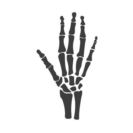 Raster illustration hand bones. Orthopedic human hand skeleton icon. Diagnostic center Stock Photo