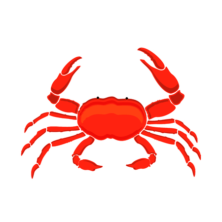 Raster illustration red crab isolated on white background. Crab icon. Seafood shop branding template for craft food packaging or restaurant design.