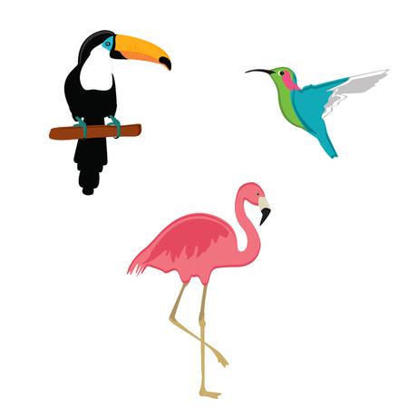 Raster illustration pink flamingo,toucan and humming bird. Exotic bird set. Stock Photo