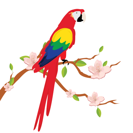 periquito: Raster illustration colorful macaw parrot sitting on blooming tree branch. Beautiful macaw. Cartoon red parrot