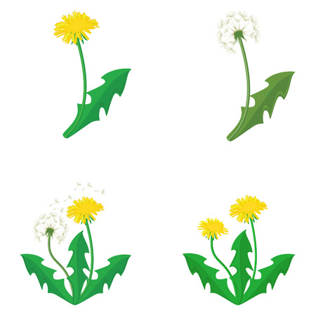 Raster illustration bouquet of dandelions with leaves. Summer flower collection, set. Yellow dandelion. Dandelion raster icon, logo.