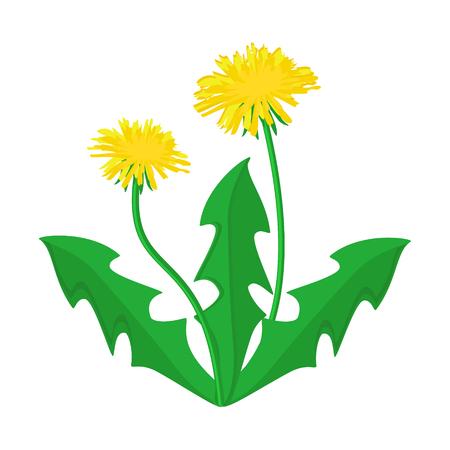 Raster illustration summer flower yellow dandelion. Dandelion raster icon, logo.