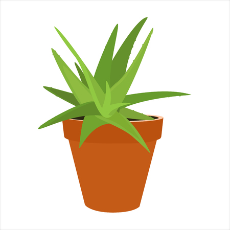 aloe vera plant: Raster illustration aloe vera in flower pot isolated on white background. Green plant. Houseplant Stock Photo
