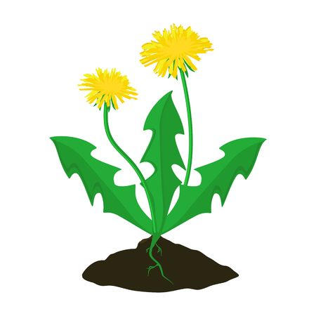 Raster illustration summer flower yellow dandelion. Dandelion raster icon