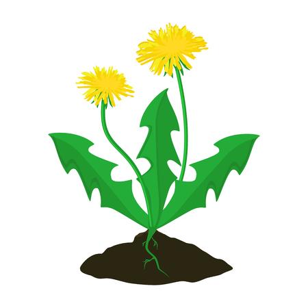 Raster illustration summer flower yellow dandelion. Dandelion raster icon