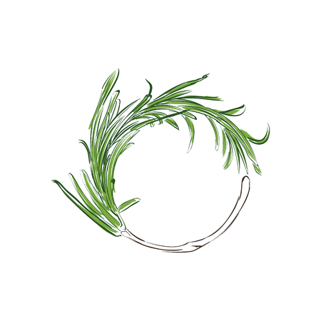 Raster illustration fresh rosemary sprig. Rosemary sprig sketch style. Herbals and spices. Wreath, laurel with rosemary