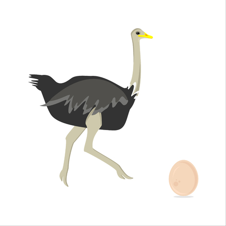 Vector illustration African bird running ostrich and ostrich egg isolated on white background. Illustration