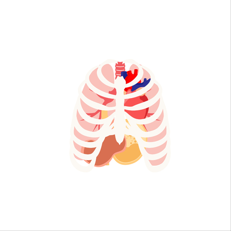 digestive: Raster illustration of human organs. Rib cage, lungs, heart and stomach. Internal organs icons and symbols