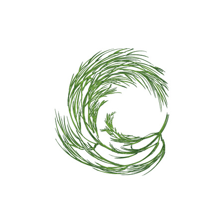 Raster illustration hand drawn fresh green bunch of dill isolated on white backgound. Sketch style. Wreath, laurel with dill Stock Photo