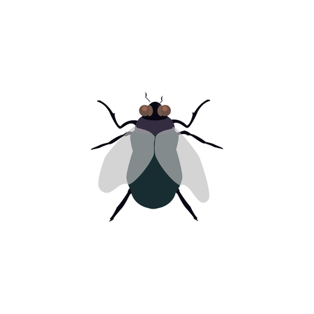 Vector illustration, house fly insect, black fly isolated on white background.