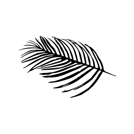 Vector icon of palm tree leaves isolated on white background. Illustration
