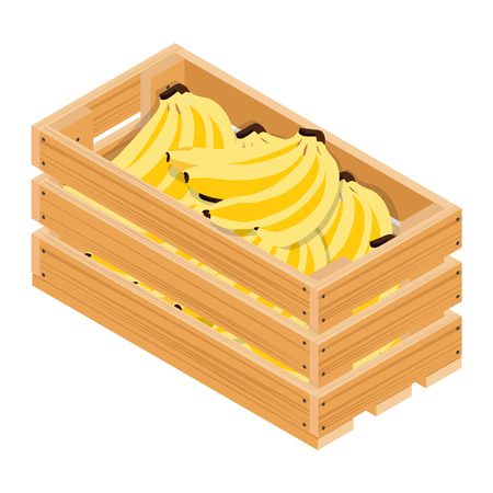 Vector isometric ripe bananas in wooden box isolated on white background.  Illustration