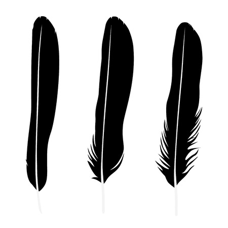 Vector illustration detailed feather silhouette collection, set