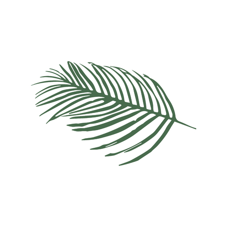 Raster icon green leaves of palm tree isolated on white background Stock Photo