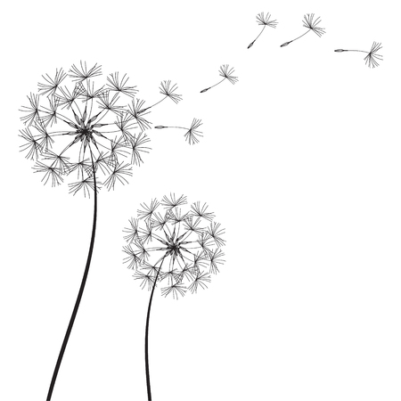 Abstract Dandelions dandelion with flying seeds stock raster