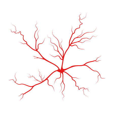 Human blood arteries. Vein raster icon set. Eye veins silhouette, health red  artery system.