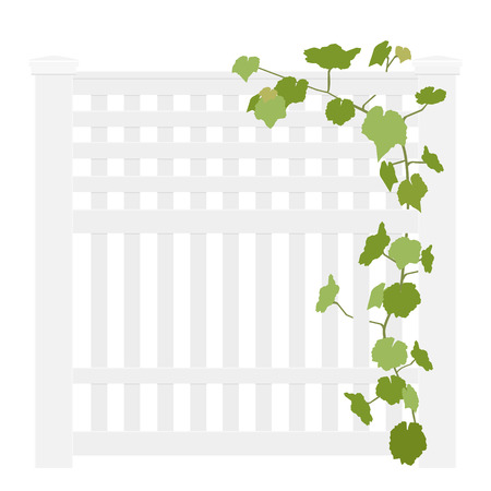 Wooden white rural garden fence  and green ivy plant over it isolated on white background. Vector illustration