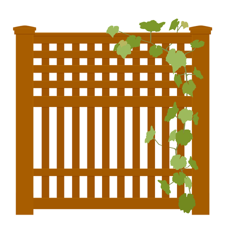 Wooden rural garden fence  and green ivy plant over it isolated on white background. Vector illustration