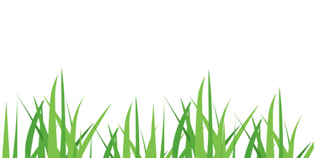 Vector illustration green grass isolated on white background. Spring fresh grass. Grass border