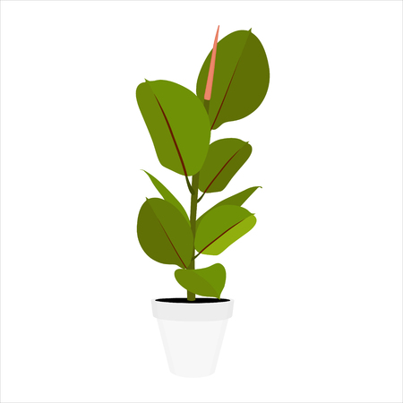 Houseplant young Ficus elastica a potted plant isolated on white background Illustration