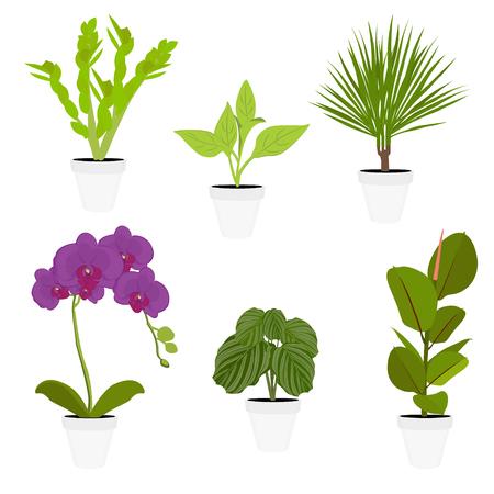 Various potted houseplants. Garden potted plants. Vector set potted plants. Flowerpot bloom