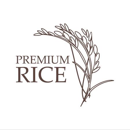 Hand drawn paddy rice premium organic natural product banner vector design