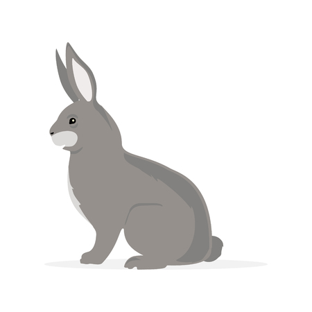Cute grey rabbit bunny rodent cartoon isolated on white background.