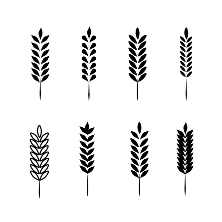 Wheat Ears Icons and Set. For Identity Style of Natural Product Company and Farm Company. Organic wheat, bread agriculture and natural eat.