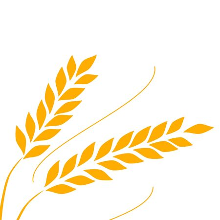 Agriculture wheat   Template vector Background Çizim