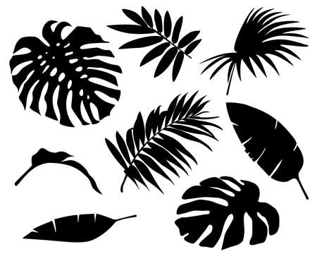 Set of palm leaves silhouettes isolated on white background. Tropical exotic leaf. Vector