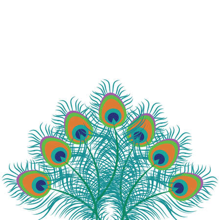 Vector illustration background with peacock feathers isolated on white.
