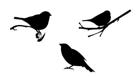 Vector set of birds and twigs. Decorative silhouette of birds sitting on tree branches. Flying birds