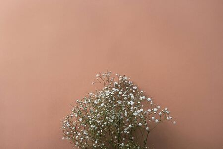 White gypsophila flowers on a brownish red background, top view, flat lay 版權商用圖片